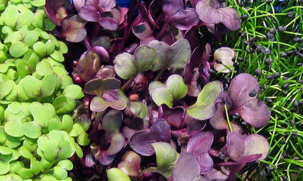 Feel Greens: Microgreens bohaté na vitaminy a antioxidanty