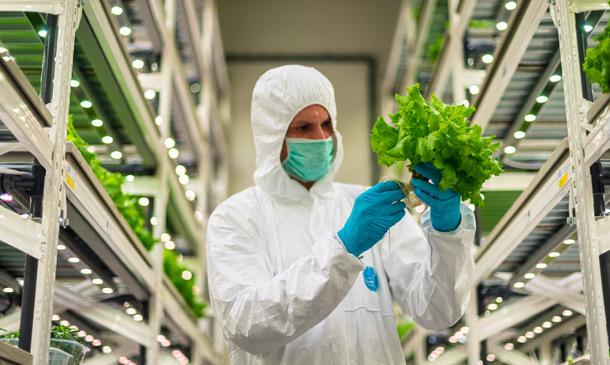 Forbes: Zelenina z továrny. Vertikální farmy rostou v Dubaji, v Břeclavi i v Praze